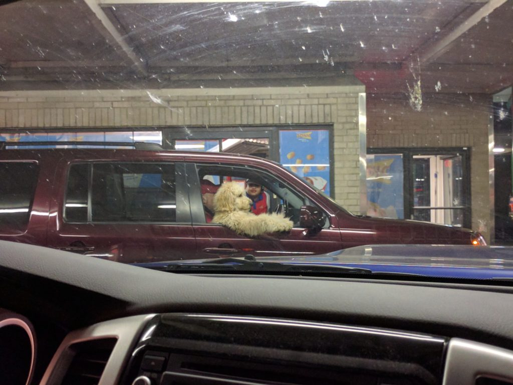 Dog in a Drive Thru